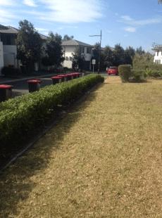 Glenmore Park hedges 4